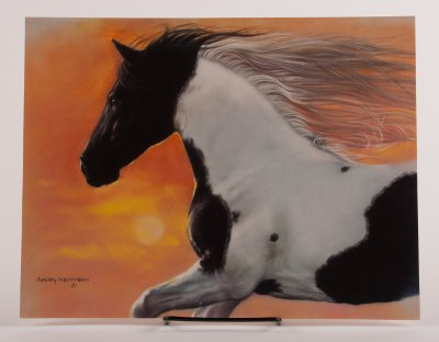 Pinto At Sunset Collectors Frame Able Birthday Card Horse Theme Gifts When It Has To Have A On